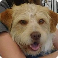 Adopt A Pet :: Teddy - MINNEAPOLIS, KS