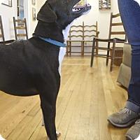 Adopt A Pet :: KC - Homewood, AL