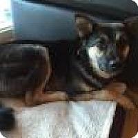 Adopt A Pet :: dolly - Saskatoon, SK