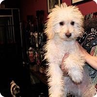 Adopt A Pet :: Bernie - Los Angeles, CA