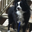 Adopt A Pet :: Finley