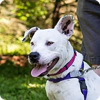 Adopt A Pet :: Tabitha~meet me~new pics! - Glastonbury, CT