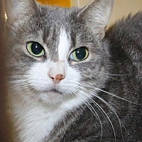 Adopt A Pet :: Isabel - Stanhope, NJ