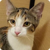 Adopt A Pet :: Raspberry - Mesa, AZ