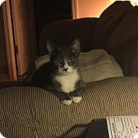 Adopt A Pet :: Josie - Tampa, FL