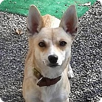 Adopt A Pet :: Louise - Oakley, CA