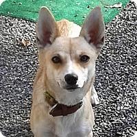 Carolina Dog Mix Dog for adoption in Oakley, California - Louise