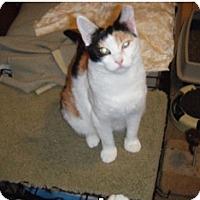 Adopt A Pet :: Abbee - Colmar, PA