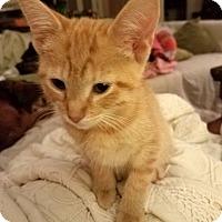 Adopt A Pet :: Bert - Marietta, GA