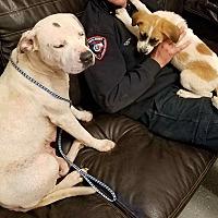 Adopt A Pet :: Jenny - Westmoreland, KS
