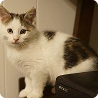 Adopt A Pet :: Arrian - Stafford, VA