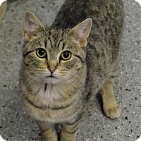 Adopt A Pet :: Pete - Michigan City, IN