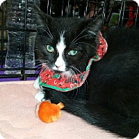 Adopt A Pet :: Mimsie - Staten Island, NY