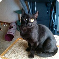 Adopt A Pet :: Calamity Jane (hit by a car) - Sterling Hgts, MI