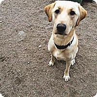 Adopt A Pet :: Duke - Wahoo, NE