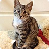 Adopt A Pet :: Jetta - Monroe, GA