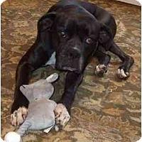 Adopt A Pet :: Mara - Albany, GA