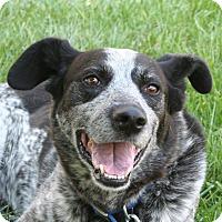 Adopt A Pet :: ROCKY - Nampa, ID