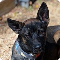 Adopt A Pet :: Jagger - Garland, TX