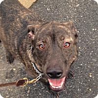 Adopt A Pet :: Nina - Ijamsville, MD