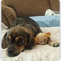 Adopt A Pet :: Cheska - Mesa, AZ