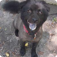 Adopt A Pet :: Noah - Little River, SC