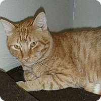 Adopt A Pet :: Clancy - Hamburg, NY