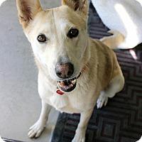 Adopt A Pet :: DeeDee - Los Angeles, CA