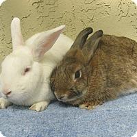 Adopt A Pet :: Chubs & Cheerio - Bonita, CA