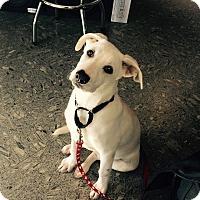 Adopt A Pet :: Rocky - Nanuet, NY