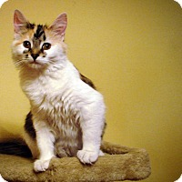 Adopt A Pet :: Joanie - Chicago, IL