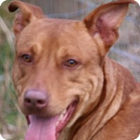 Adopt A Pet :: BANJO(TWO GREAT BREEDS! WOW! - Wakefield, RI