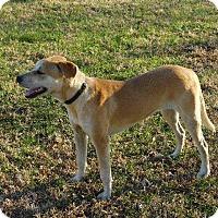 Adopt A Pet :: Sara - Aurora, CO