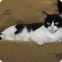 Adopt A Pet :: Dez - Baton Rouge, LA