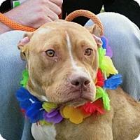 Adopt A Pet :: Jersey - Cleveland, OH