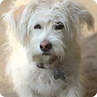 Adopt A Pet :: Barnaby - Woonsocket, RI