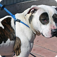 Adopt A Pet :: Mike - Berkeley, CA