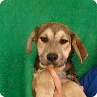Adopt A Pet :: Zeek - Oviedo, FL