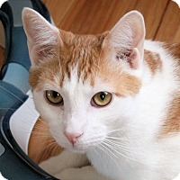 Adopt A Pet :: Teddy - Morganton, NC