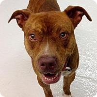 Adopt A Pet :: Carson - Baton Rouge, LA