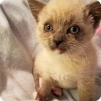 Adopt A Pet :: Argon 04-4040 - Fremont, CA