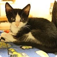 Adopt A Pet :: Bobby - Medina, OH