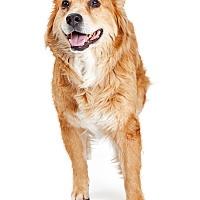 Adopt A Pet :: Wilma - Tempe, AZ