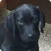 Adopt A Pet :: Tom - Columbus, IN