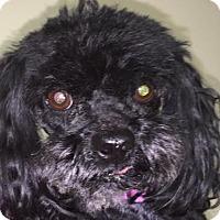 Adopt A Pet :: MOLLY BARKLEY - Waldron, AR