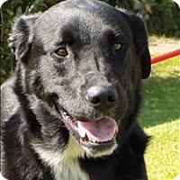 Adopt A Pet :: Cielo - Duluth, MN