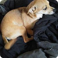 Adopt A Pet :: Freddy - Detroit, MI
