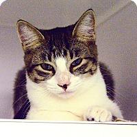 Adopt A Pet :: Biscotti - West Palm Beach, FL