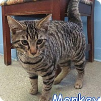 Adopt A Pet :: Monkey - Georgetown, SC