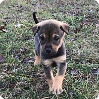 Adopt A Pet :: Brit - Holly Springs, NC